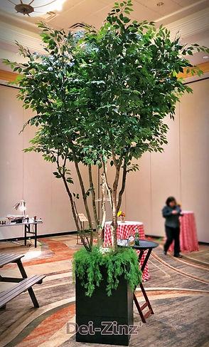 12-foot-silk-ficus-tree-rental_edited.jp