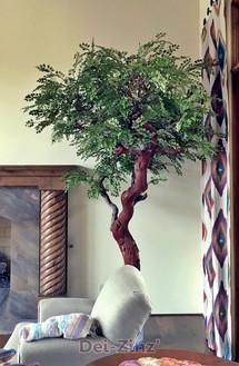 8-foot silk button leaf tree on manzanita
