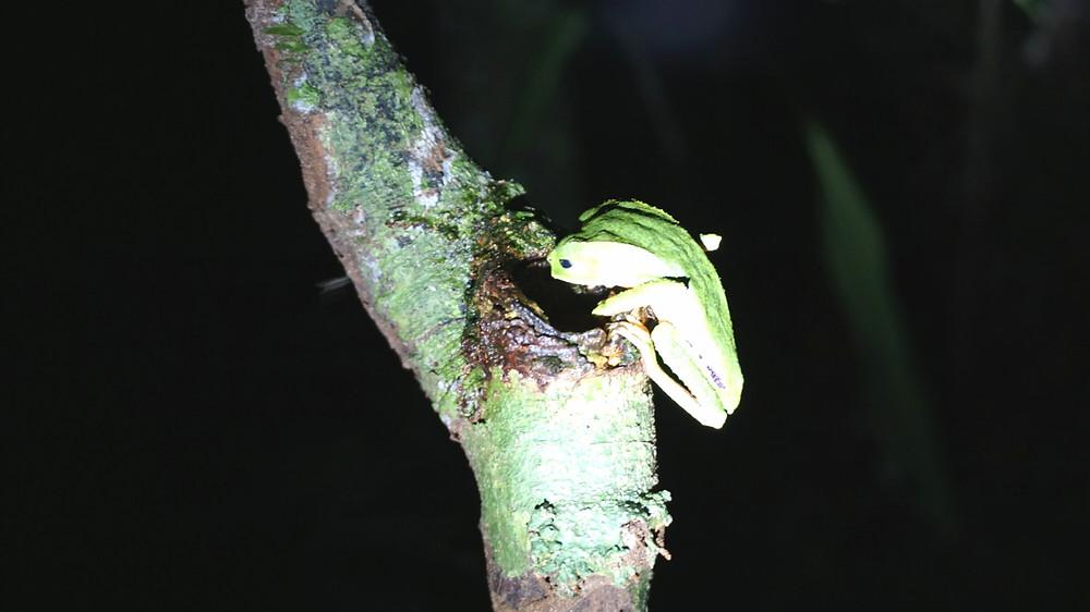 Cuyabeno, Amazonie, Equateur