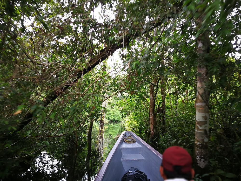 l'Amazonie en bateau, Cuyabeno