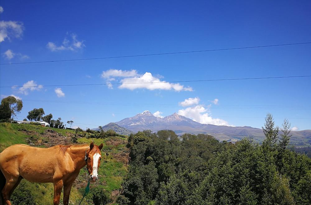 La route des volcans .. et des chevaux, Equateur