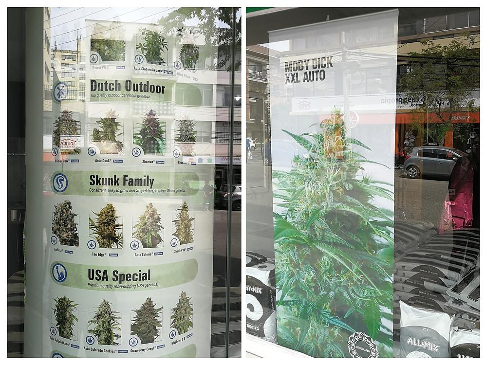 Cannabis de Chile