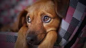 Veja qual será o aumento da pena para agressores de cães e gatos