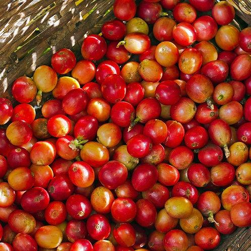 Kenyan Peaberry