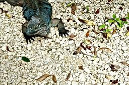 Queen Elizabeth Botanic Park Cayman Islands Amvivo