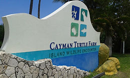 Turtle Farm Cayman Islands Amvivo