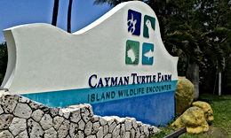 Turtle Farm and Stingray City Cayman Islands Amvivo