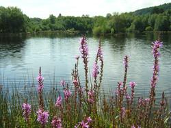 Lac de Saint Agnan