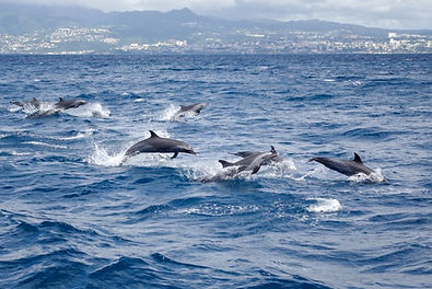 Planete dauphins