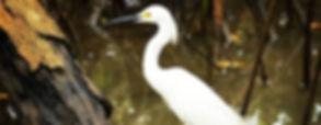 oiseau egrette_edited_edited.jpg