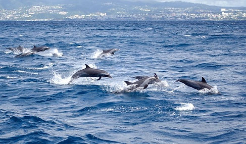 dauphins-vedette-9_edited.jpg