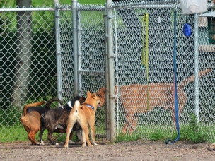 Riley Road Dog Park proposal details