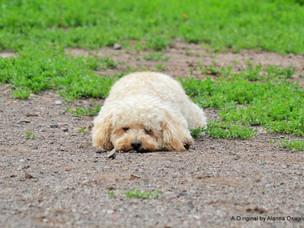 Observation Dog Park play dates
