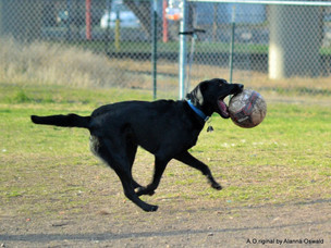 We need YOU to get an eastern dog park.  Eastern dog park update.