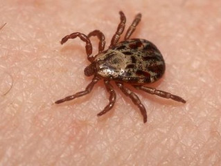 A simple guide to all things ticks