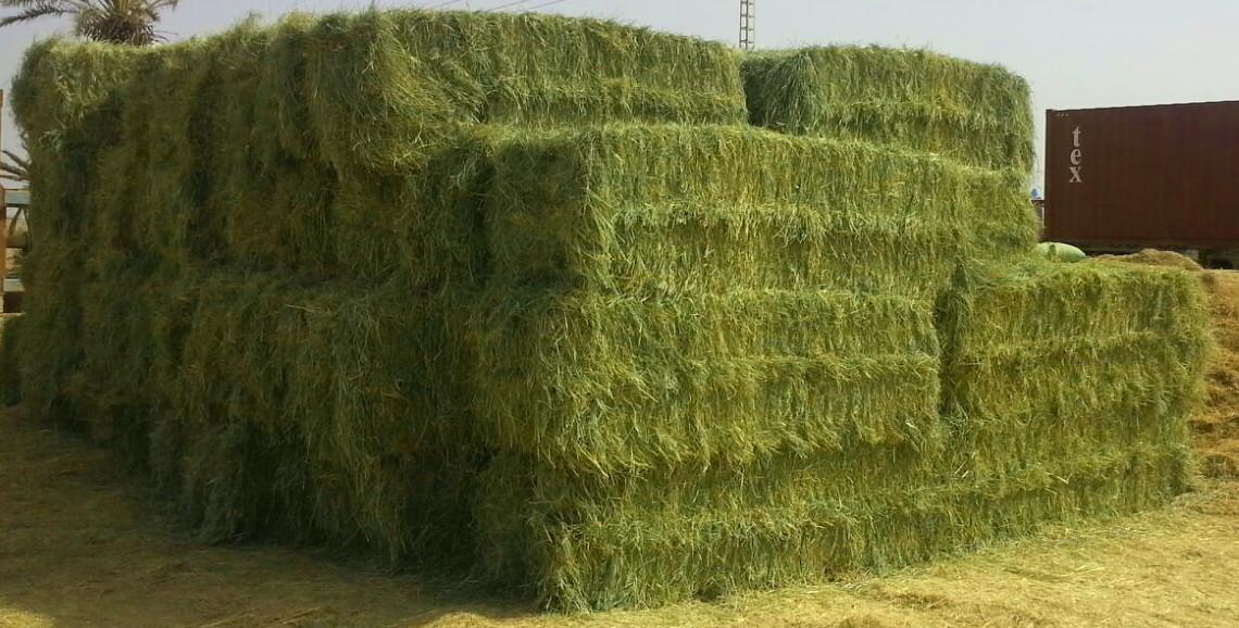 Alfalfa Grass Bales