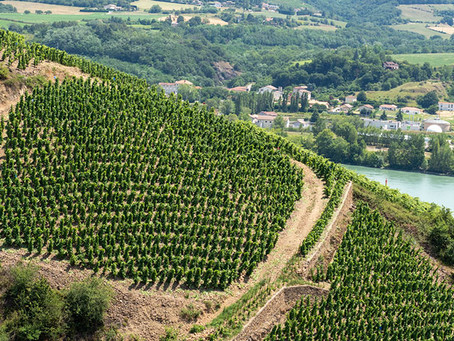 10 Tips for a DIY Wine Tour in France
