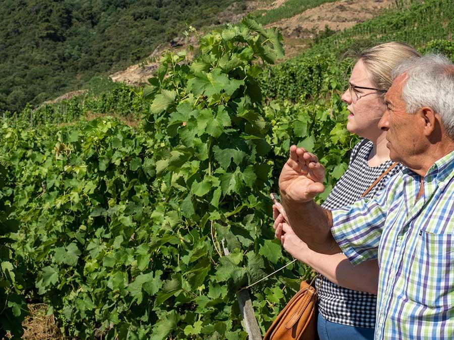 how to buy wine vineyard