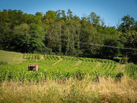 Beaujolais Wine Region Guide