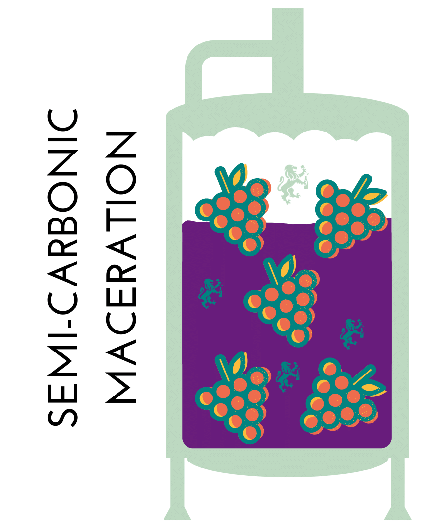 beaujolais wine region winemaking carbonic maceration infographic