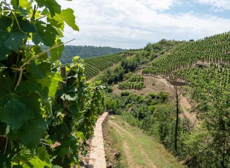 Northern Rhône Wine Region Guide