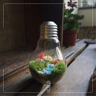 苔燈泡 bulb capsule workshop