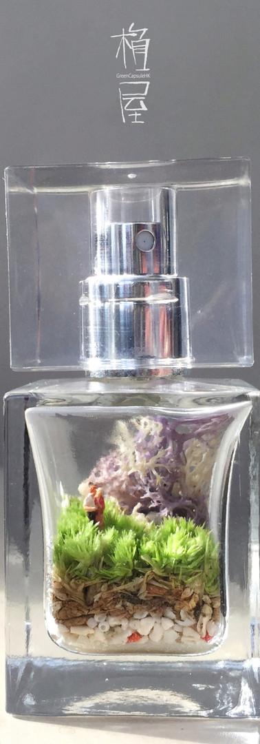 香水瓶苔盆栽