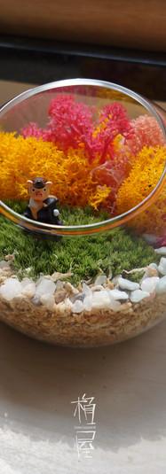 玻璃瓶苔盆栽
