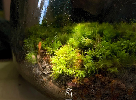 [Ep-01]苔蘚簡介 Introducing the Moss