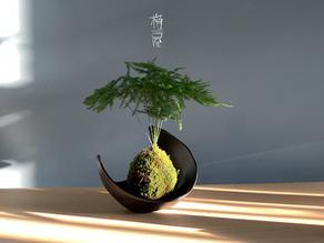 [Ep-08] 文竹的照顧