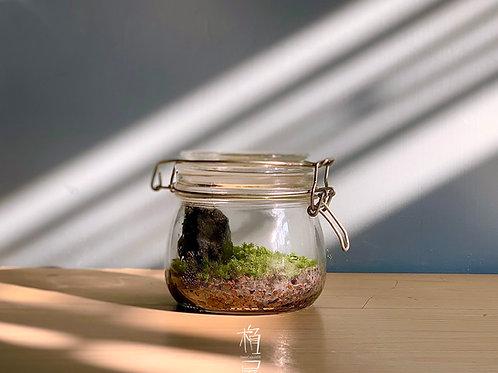 Moss Terrarium 苔盆栽DIY Kit