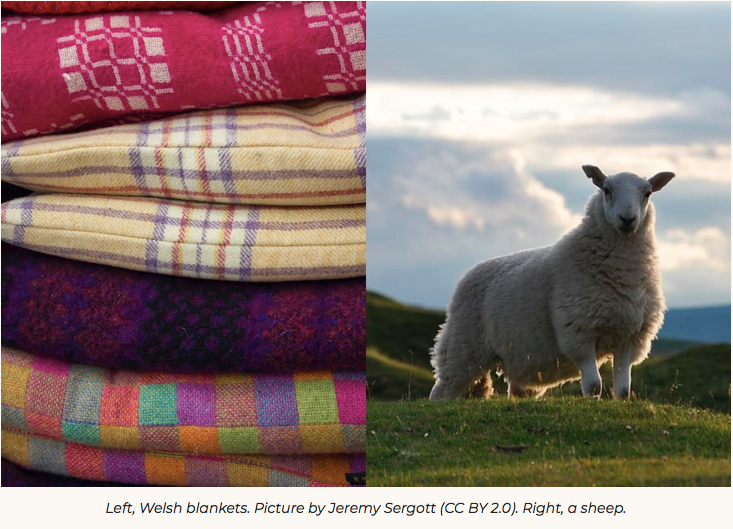 Welsh wool: How a once thriving industry could provide a monumental opportunity for Wales