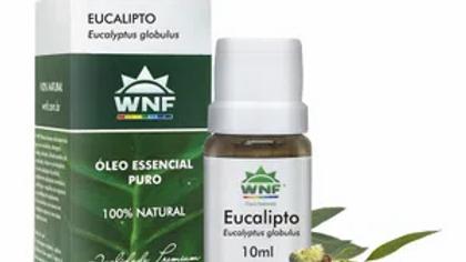 Óleo Essencial Eucalipto 10 ml - Eucalyptus globulus