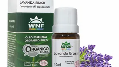 Óleo Essencial Lavanda Brasil Organica 10 ml - Lavandula dentata