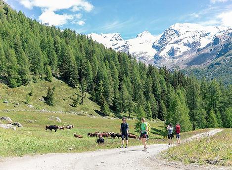 Trekking del Monte Rosa