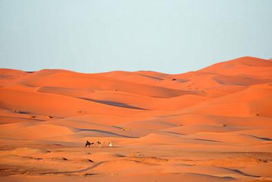 camel-Merzouga-1.jpg