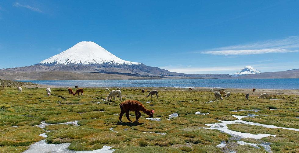 Parco Nazionale di Lauca, vulcano Parinacota