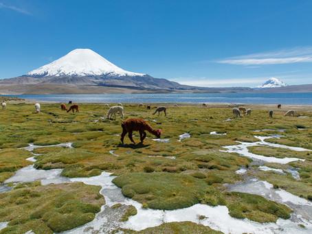 Il Norte Grande del Chile: Lauca, Suriplaza e la Reserva de las Vicunas.