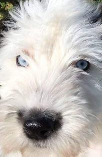 blue eyes1.jpg