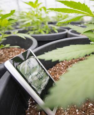 Sfondo accessori coltivazione - One Bloo