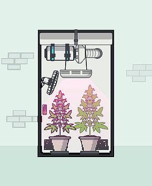 Sfondo growbox - One Blood Genetics