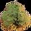 Thumbnail: Moonrock Weedoit