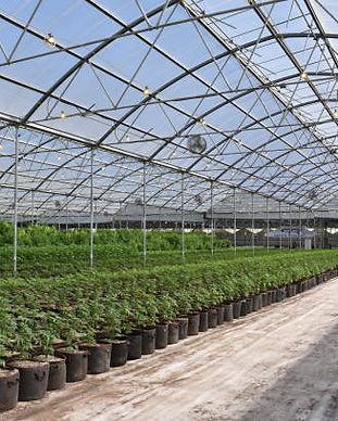 Immagine greenhouse.jpg