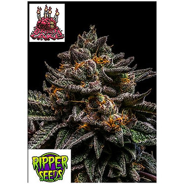 Ripper Seeds - Brain Cake - 1 Seme Femminizzato