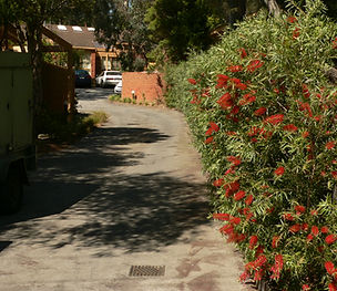 Driveway with red flowering hedge