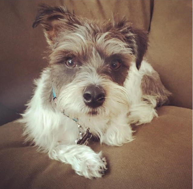 My dog, Murray