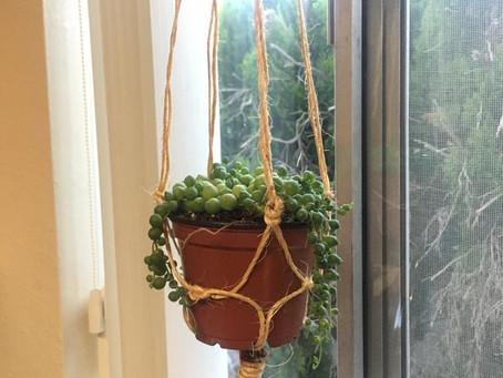 DIY Indoor Gardening!