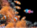 Screen Shot 2020-02-02 at 4.03.27 PM.png