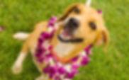 hawaiian-dog-names.jpg