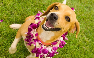 hawaiian-dog-names.jpg